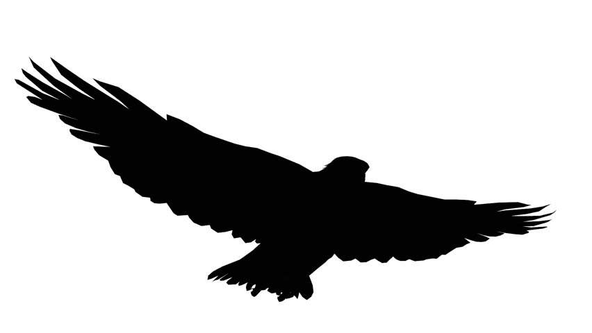 Loop Animated Flying Sketch Eagle On Isolate White Stock