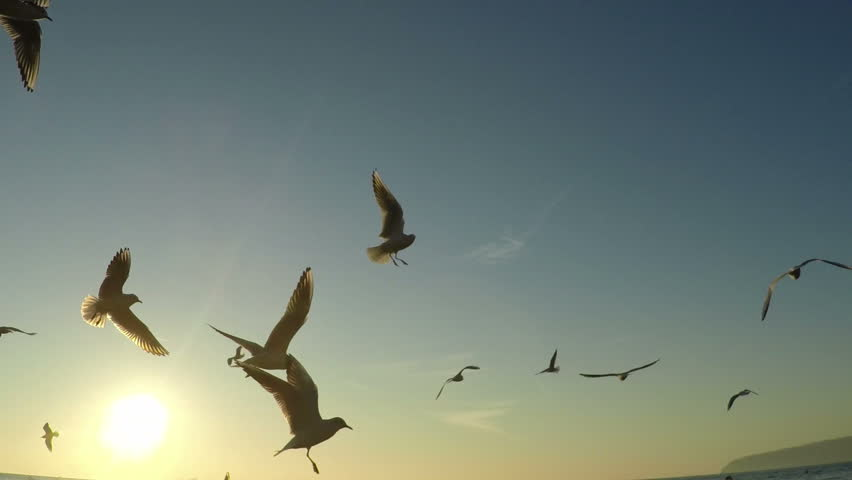 description aerial flying birds - photo #1
