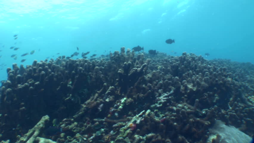 Header of Acropora