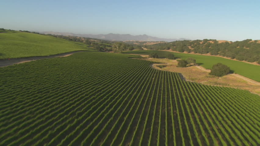 Helicopter low level aerial of Santa Barbara County vineyards, California.