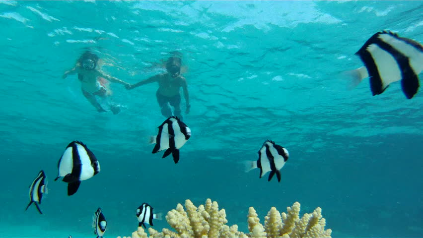Young couple snorkelers swim away from the camera holding for Swimming with the fishes