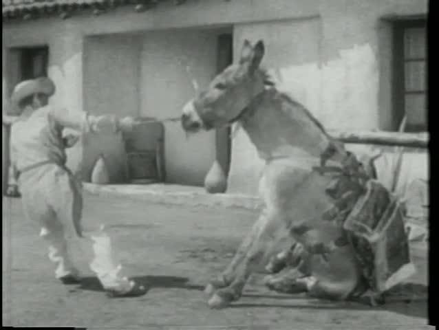 Man pulling stubborn donkey