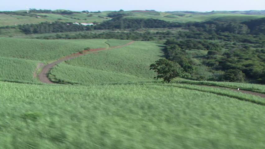 Sugarcane aerial 4 - HD stock footage clip