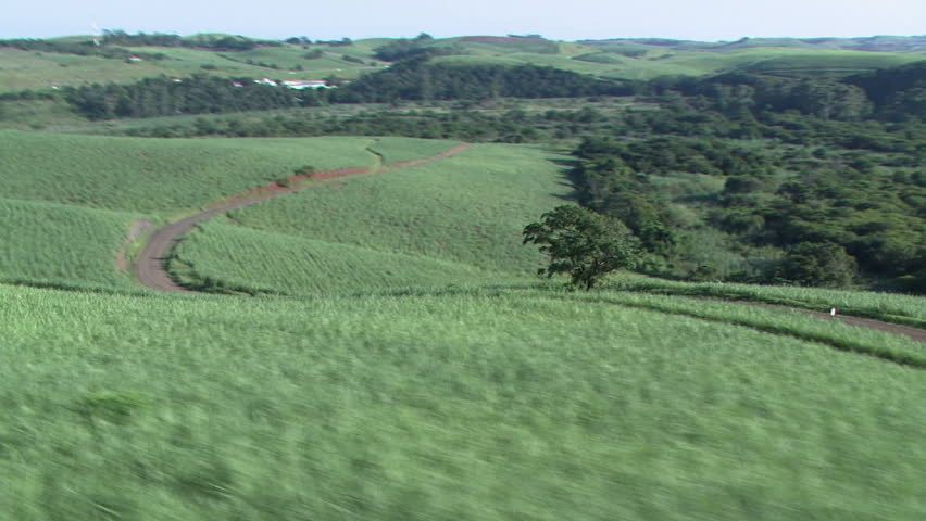 Sugarcane aerial 4