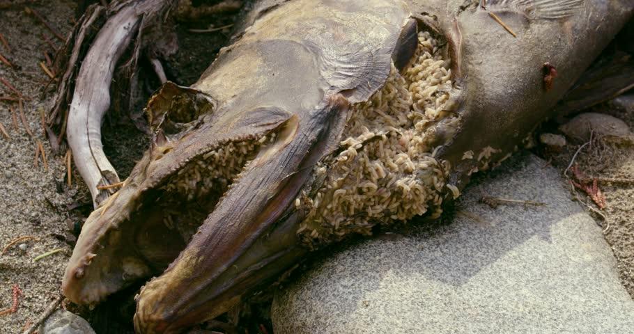 maggots eating flesh - photo #23