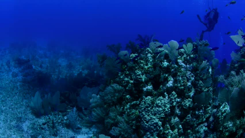 Diver with reef fish in Cayman Brac