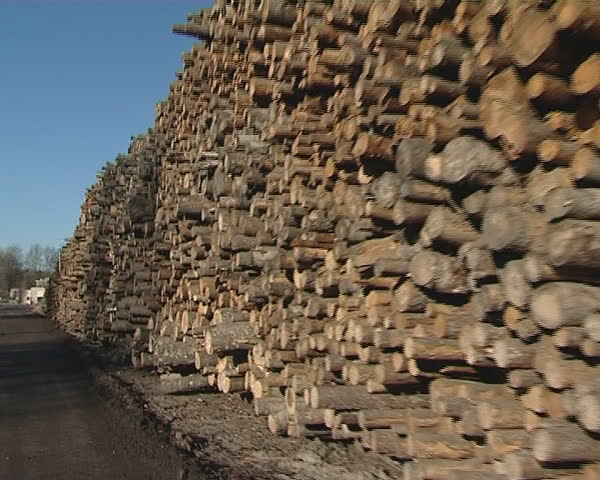 Large piles of cut tree trunks natural round logs. Blue sky. Timber industry.