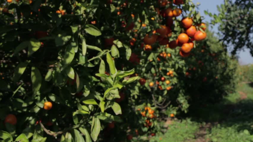 Portugal fruits