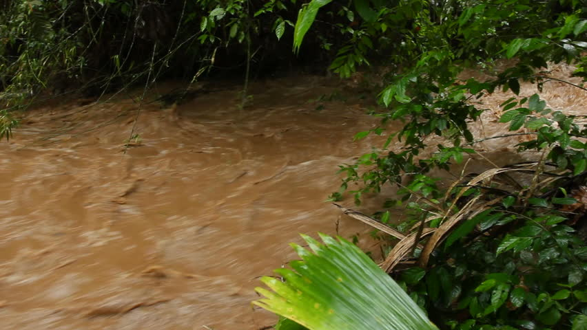 Mud and water pouring down a jungle watercourse after very heavy rain. On the Pacific coast of Ecuador. - HD stock footage clip