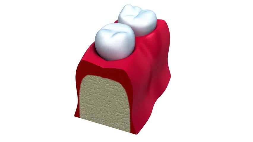 Anatomy of healthy teeth in details - HD stock video clip