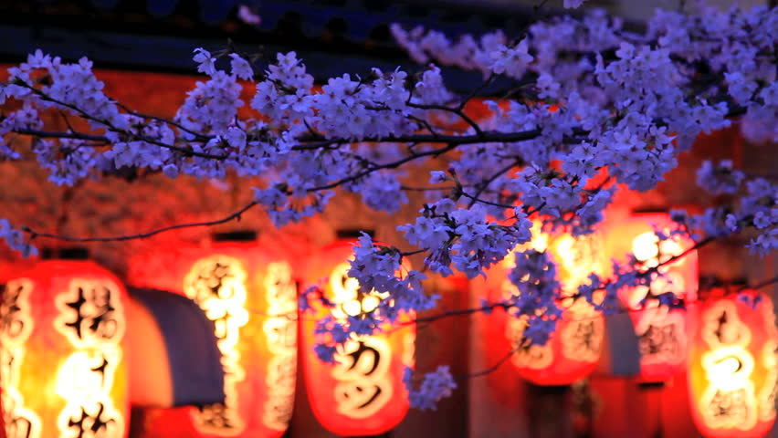 Evening. The branches of cherry blossoms against a background of Japanese lanterns. | Shutterstock HD Video #2142575