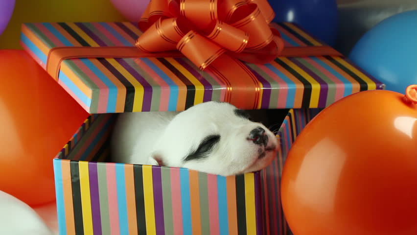 Image result for puppy birthday present
