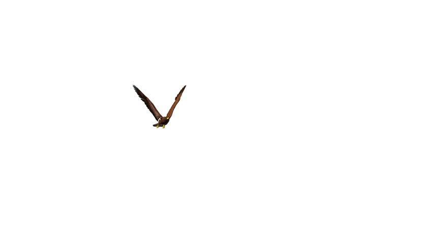 Golden Eagle   - HD stock video clip