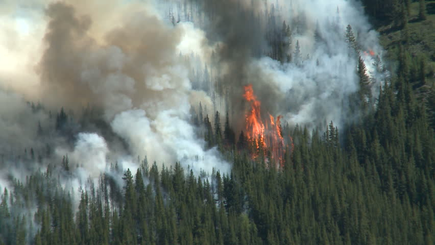 Forest fire in the Rocky Mountains - HD stock footage clip