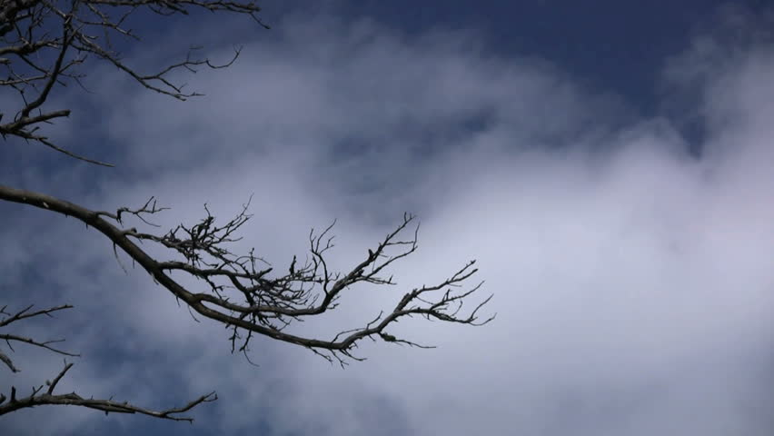 Clouds rolling in on the sky with a dead tree branch in the foreground - HD stock footage clip