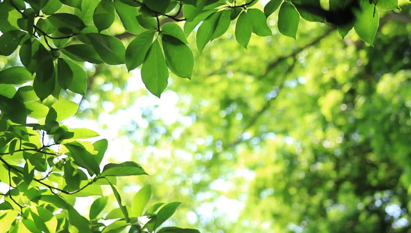 Wind Blowing Vibrant Leaves Stock Footage Video 1201192