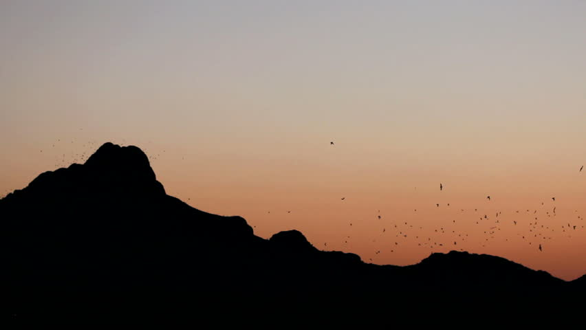 Thousands of bats fly over silhouetted mountains at sunset. 1080p | Shutterstock HD Video #2320892