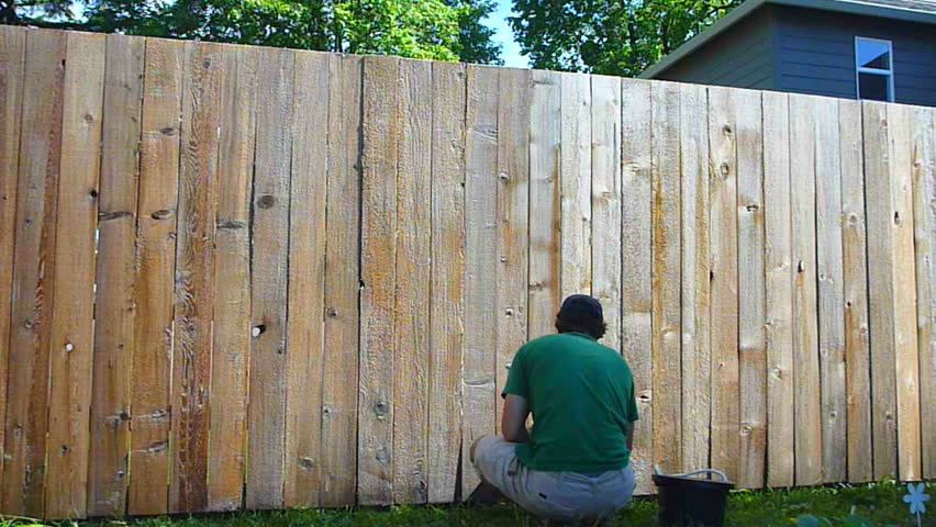 Man in backyard stains cedar fence time lapse.