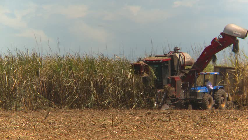 tractors during the sugar cane harvest