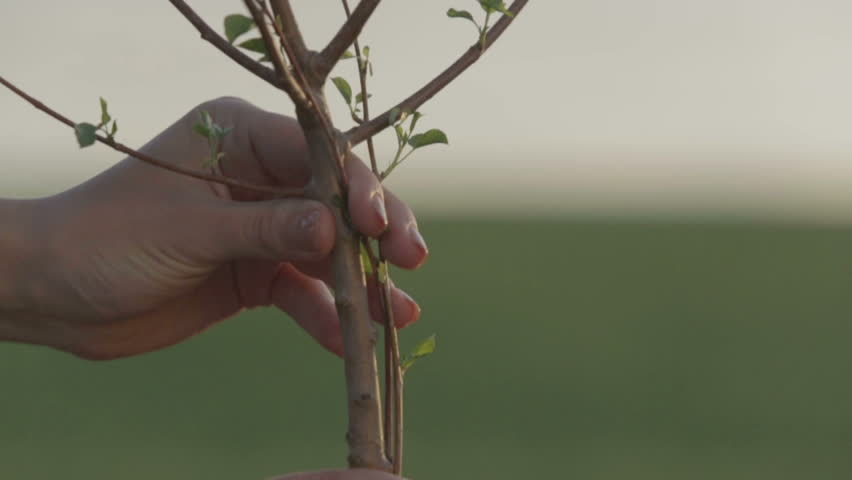 Planting a young tree - HD stock footage clip
