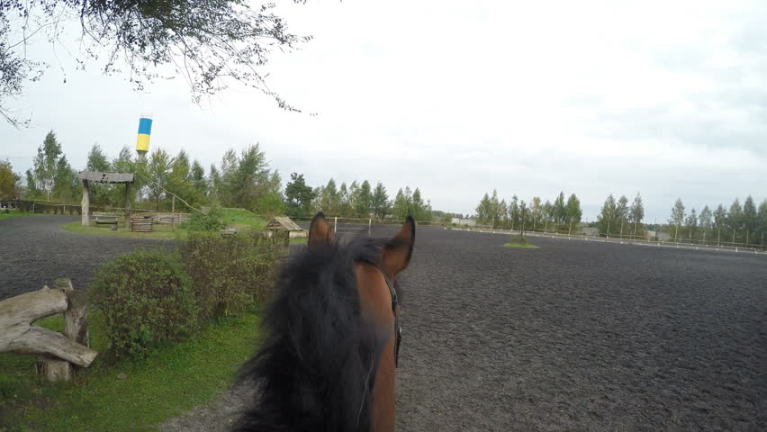 First person view of riding a horse. Point of view of rider walking at stallion at nature. Pov motion. Close up | Shutterstock HD Video #24630371