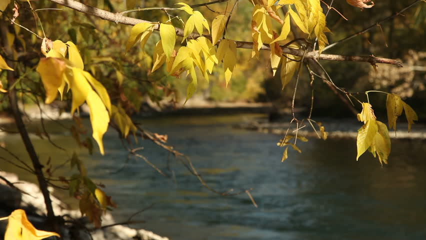 Yellow autumn foliage on the banks of the Boise River. - HD stock footage clip