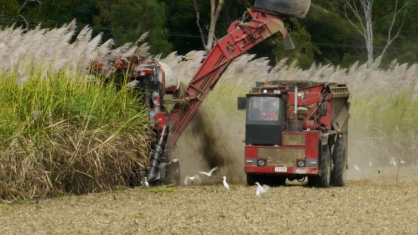 a sugar cane harvester and truck cut cane in far north Queensland, Australia