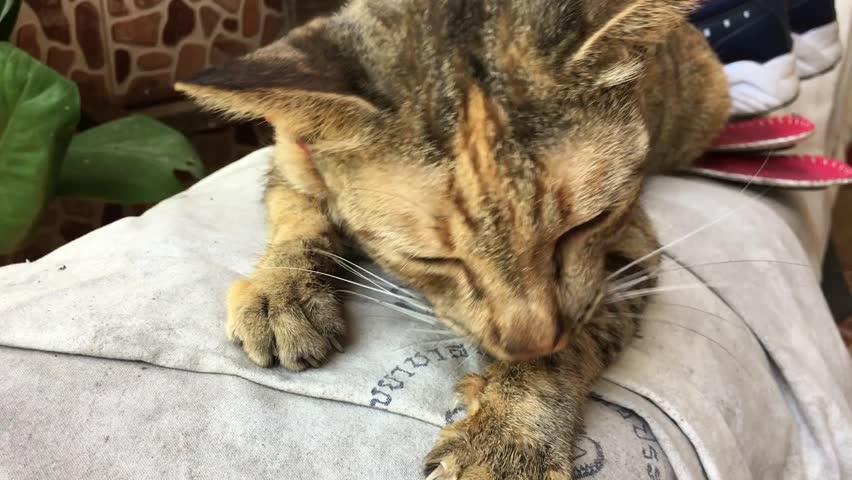 Cat cute animal playing background pet floor portrait   Shutterstock HD Video #25231004