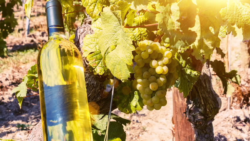 Summer landscape with vineyards and bottle of white wine for picnic. Wine making concept | Shutterstock HD Video #25247735