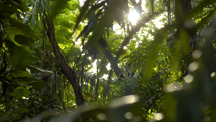 Dolly shot of the setting sun shining into a dense tropical jungle in Thailand.