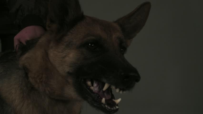 Mad Dog (slow motion 1000 fps)