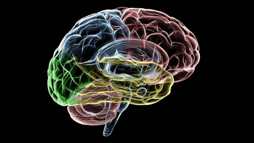 Animated human brain - photo#16
