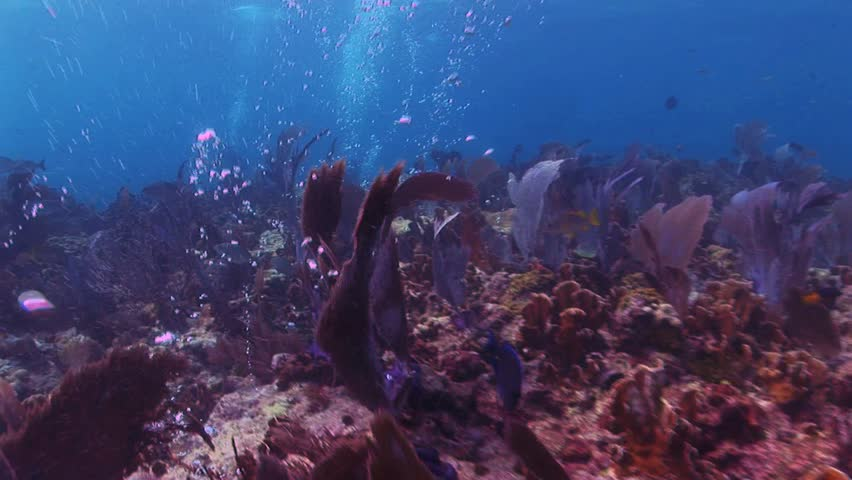 Sea Bottom Of The Sea Fish Seabed Sea: Fish On A Sand Bottom Stock Footage Video 339529
