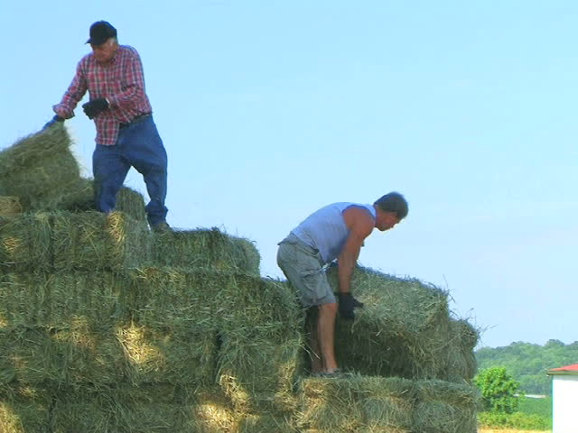 Farmers Loading Hay