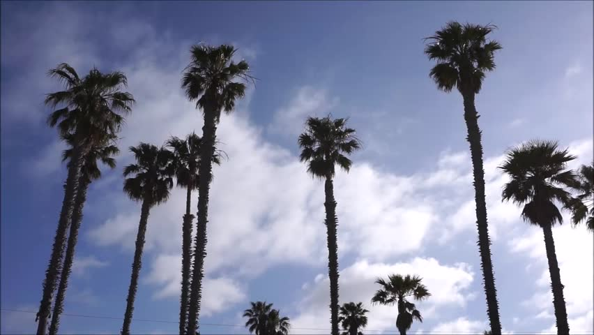 Palm trees in sky with clouds moving behind | Shutterstock HD Video #25886321