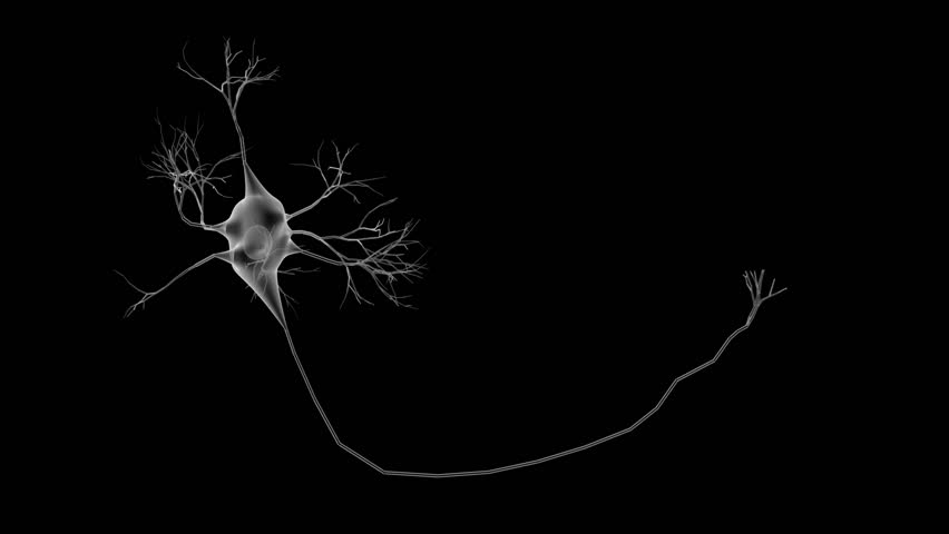 3D Animation With Damage On Multiple Neurons Highlighted ...