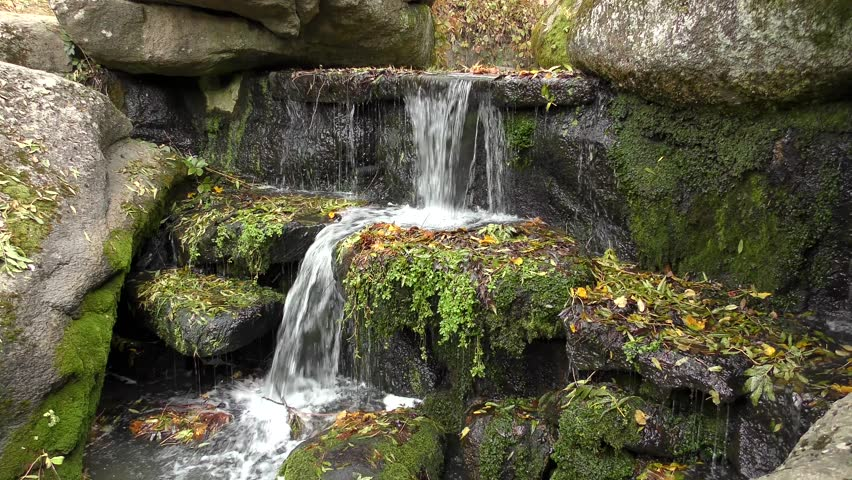 A forest stream with a small waterfall.   Shutterstock HD Video #26171135