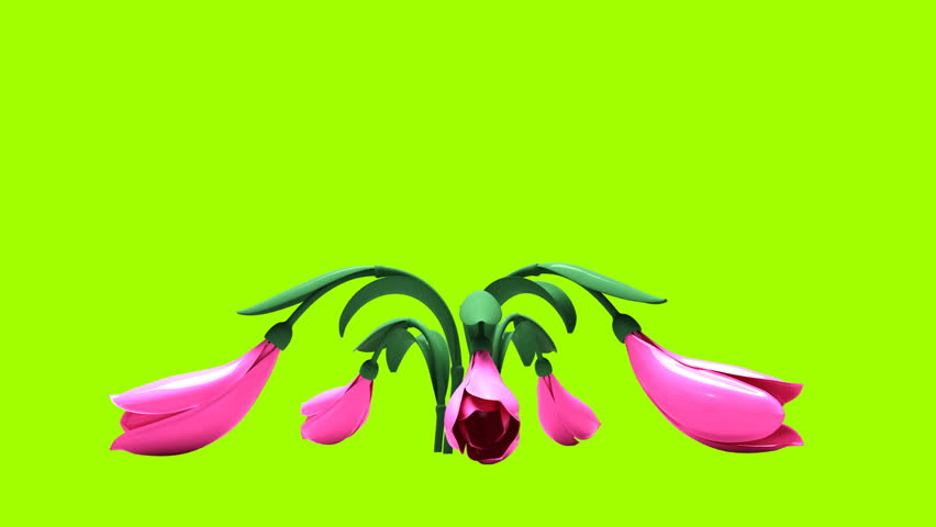 drop flowers on a green background - HD stock footage clip