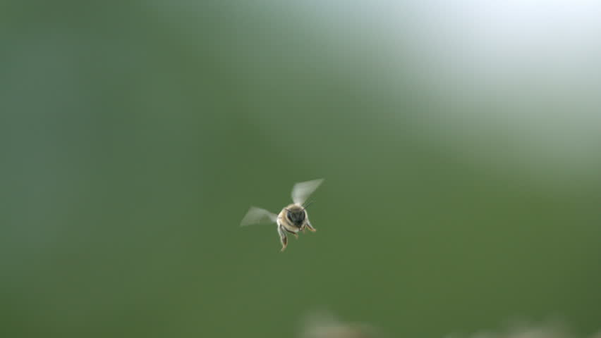 Bee is flying in forest - Slow motion video