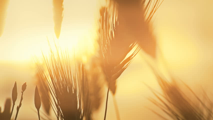 grass sunset #2718089