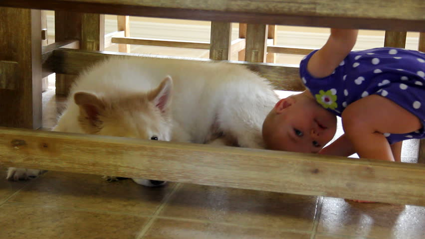 Baby And Dog Under Table Stock Footage Video 2734532
