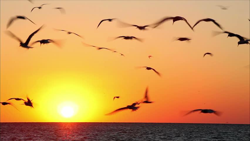 Resultado de imagem para birds flying