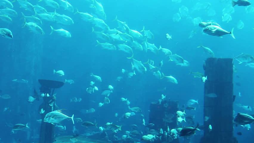 Ocean Scenery Underwater Stock Footage Video 2737106 ...