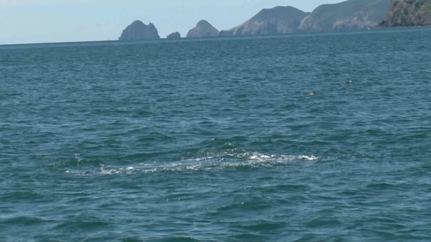 Bay of Islands, New Zealand. September 2011. Dolphin videoed in slow motion jumping out of the water.