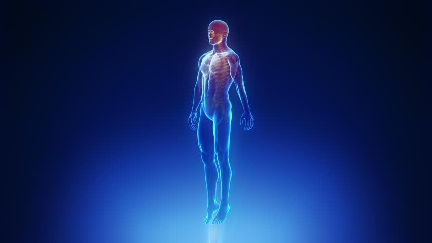 Male body scan in loop