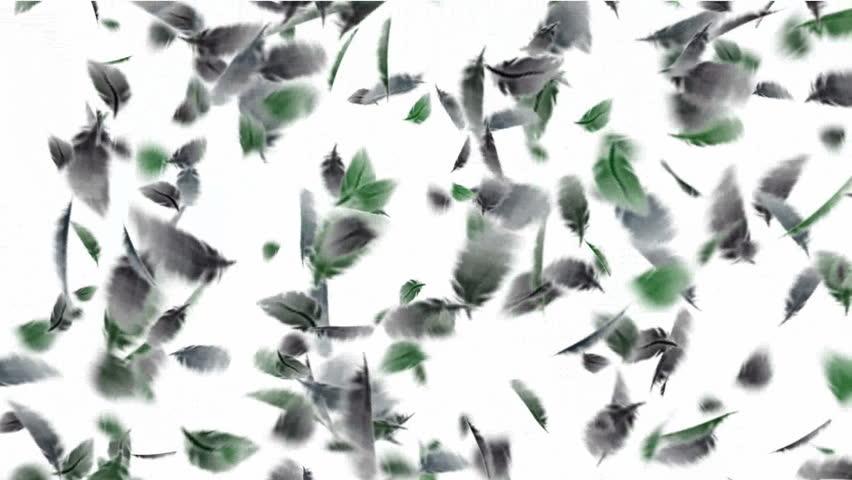 bird feathers f...
