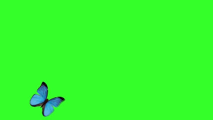 Butterfly animation green screen Spring butterfly's wing flight wings