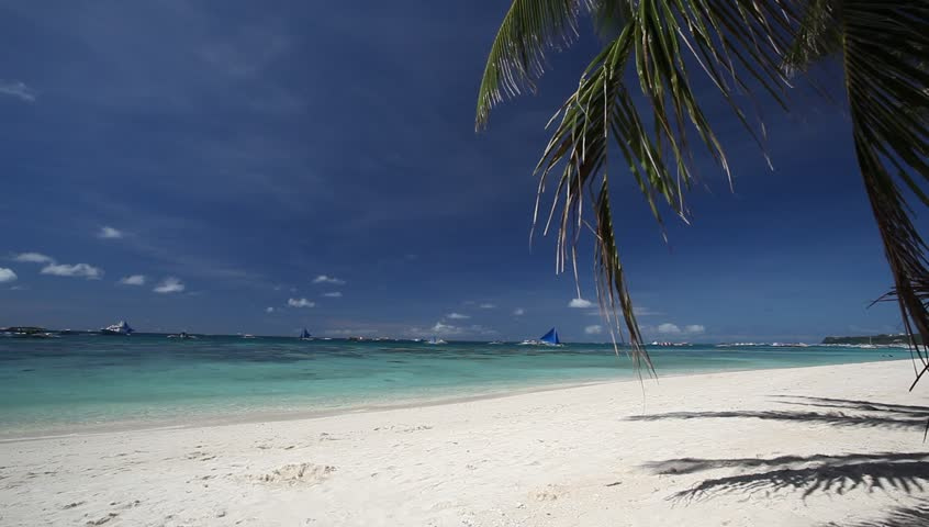 Tropical beach with palm - HD stock footage clip