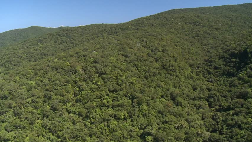 Aerial of Rainforest on mountain slope
