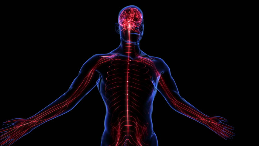 Human nervous system. Loop - HD stock video clip